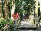 马来西亚沙巴京那巴当岸的土地,kinabatangan river sabah,编号52287370